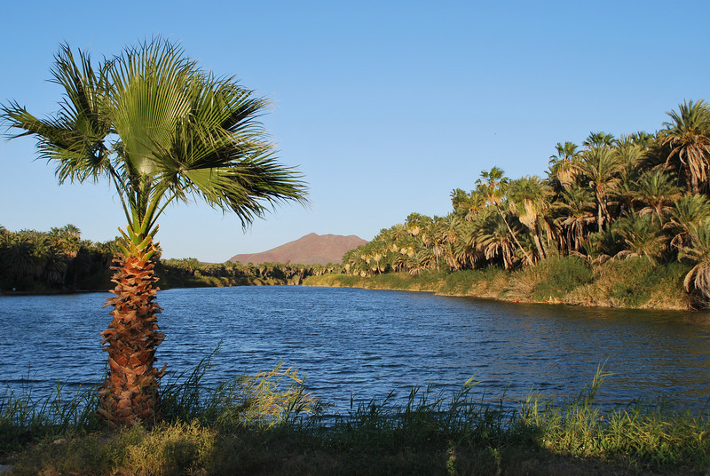 the San Ignacio oasis - as tranquil as always