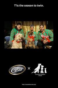 Cesar Twinning Season Pop Up