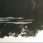 Ali calling Oyster Bay Lake 5/31/07