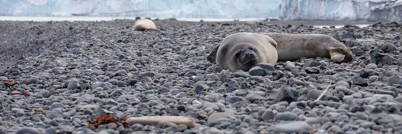 2019_01_Antarktis_01543.jpg