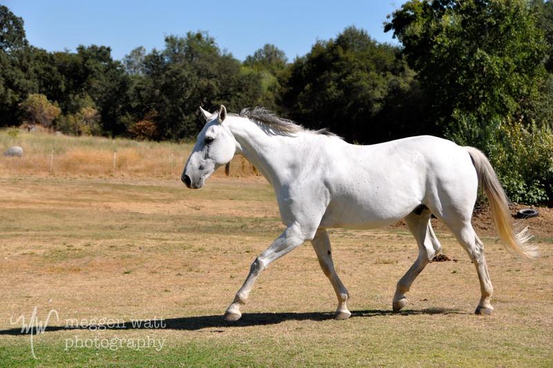 EB&Horses-069.jpg