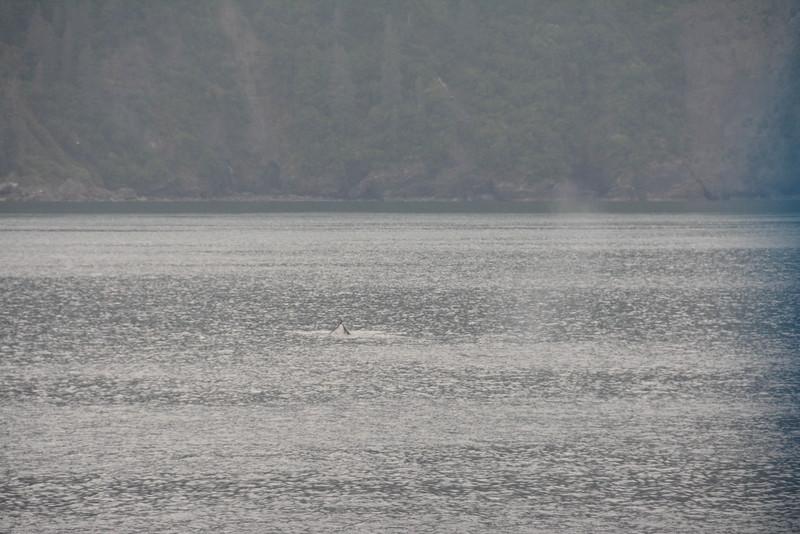 Kenai-Fjords-39.jpg