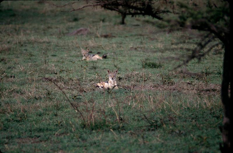 Kenya2_042.jpg