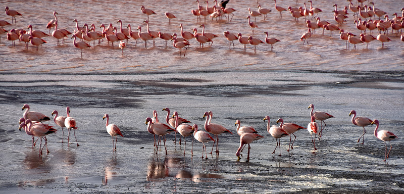 BOL_2623-Flamingos.jpg