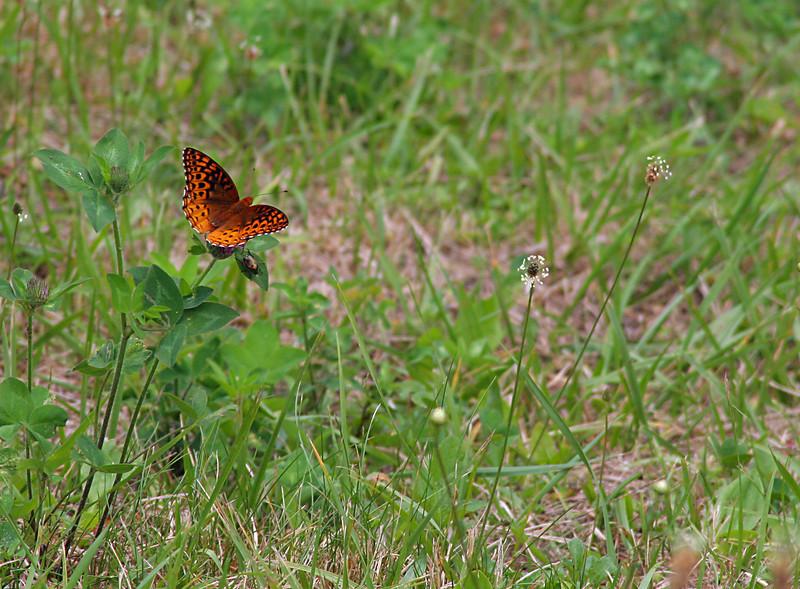 6795 Butterfly & Bug.jpg