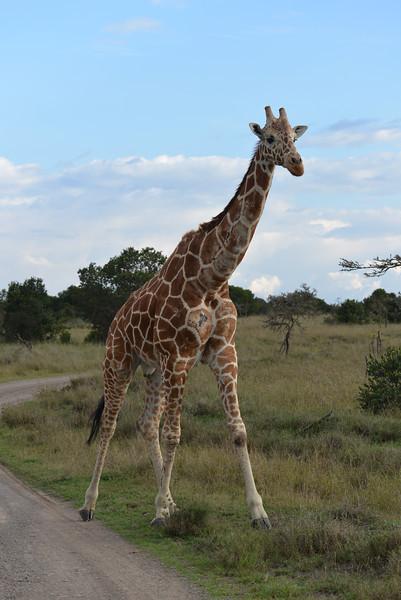 East Africa Safari 28.jpg