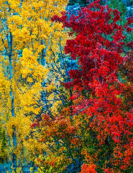 Sierras_Fall Colors-1.jpg