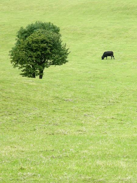 Pasture - Ireland - August 12, 2008
