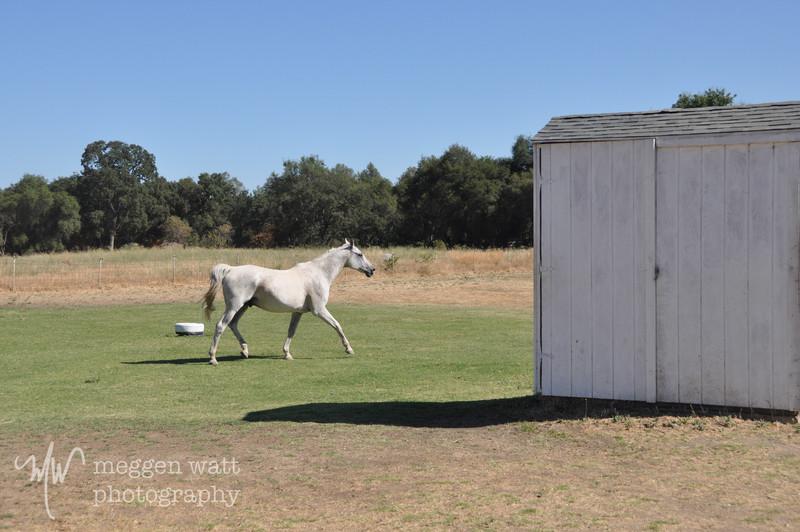 EB&Horses-111.jpg