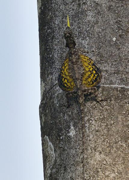 Agumbe-April-2015