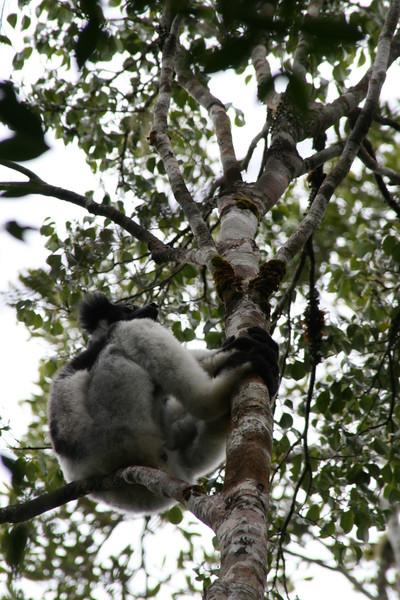 Perinet Madagascar 2007