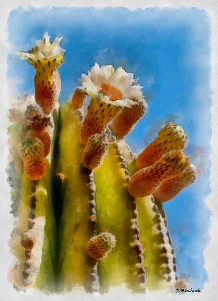 J-Baja-All-2-Baja-Processed---cactusflowers_DAP_Aquarell.jpg
