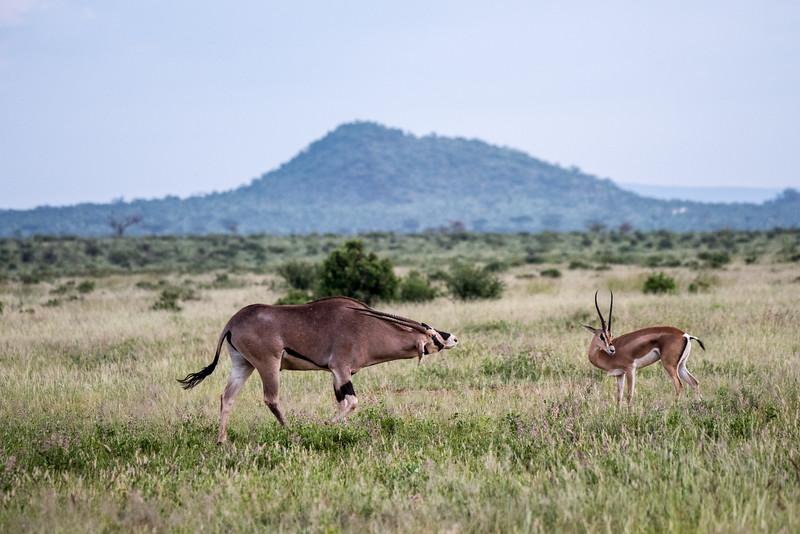 Samburu (30 of 70).jpg
