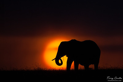 2010 Kenya