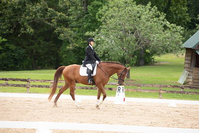 Horse 404