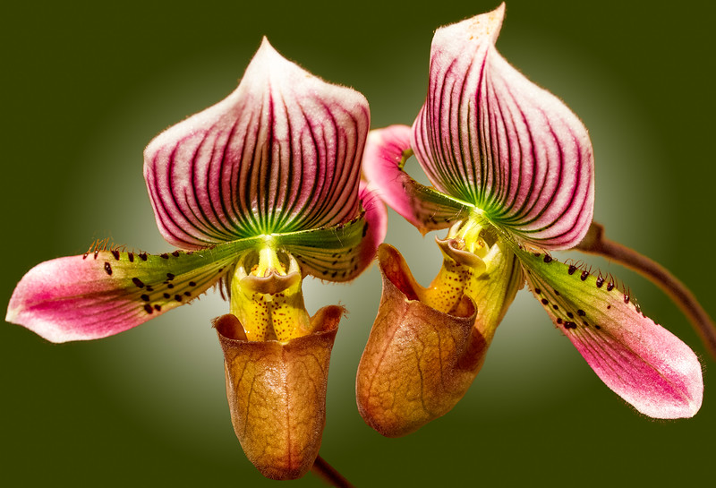 *Orchids-05.jpg