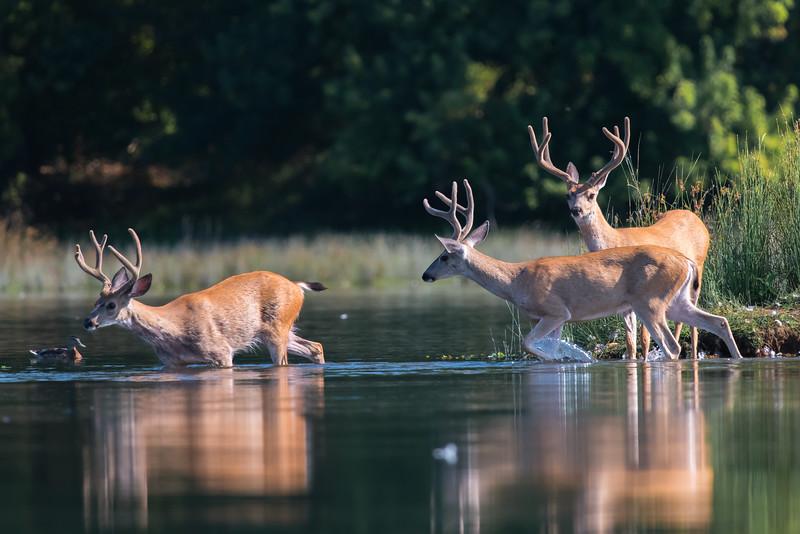 American River Ponds 7-26-16-4406.jpg
