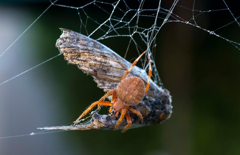 Spiders-2.jpg