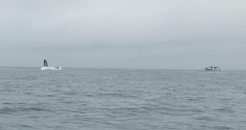 Moss Landing Whales 6.jpg