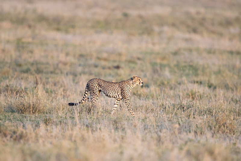 Africa - 101616 - 5853.jpg