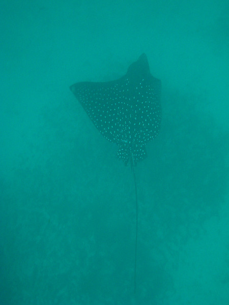 Diving in the Galapagos (271 of 392)