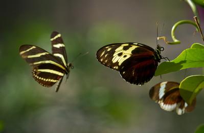 Dallas Butterfly Garden