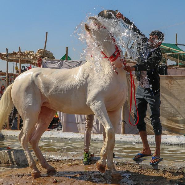 India-Pushkar-2019-9888.jpg