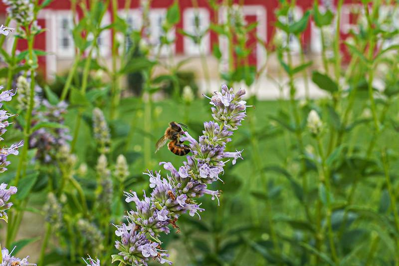 Arboretum, July Harvest-78.JPG