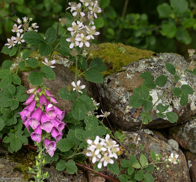 Larkspur rocks Scotland-1.jpg