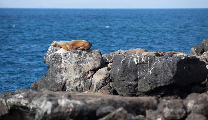 Sea lion napping on the ledge.