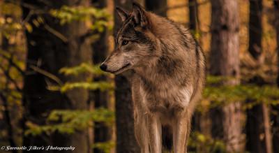 Adirondack Wildlife Refuge