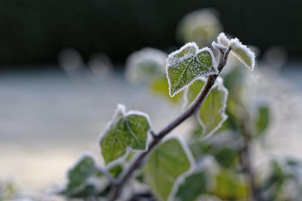 Hoar-frosted garden