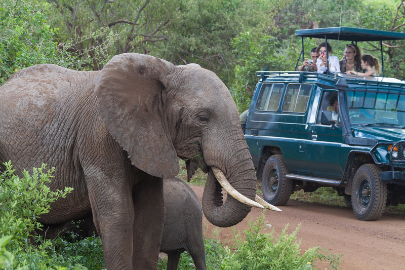 A group of safari tourists looks on and takes photos of a mother African Bush Elephant and her baby in Tanzania.