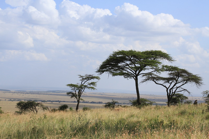 Kenya Part2 '15 005.JPG