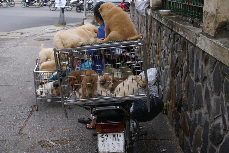 Puppy Pound, Ho Chi Minh, Vietnam