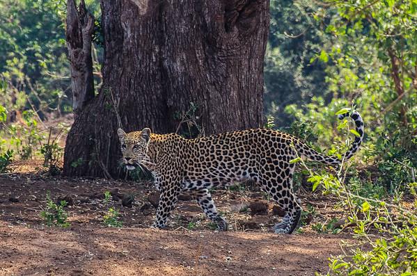 Kruger National Park 2019