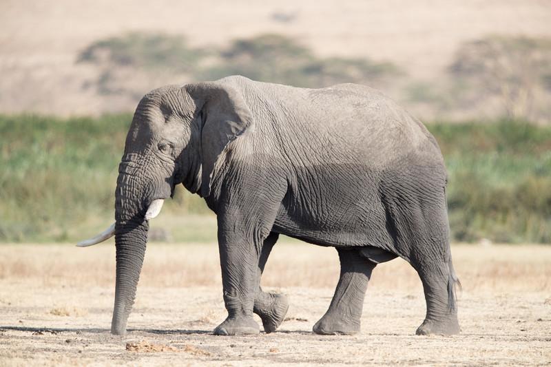 Africa - 101816 - 6387.jpg