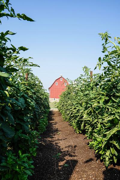 Arboretum Farm 8-19-23.JPG