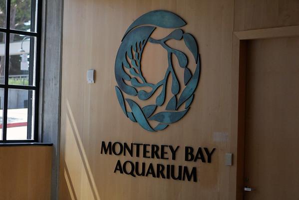 Monterey Bay Aquarium 8/10