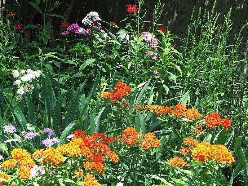 garden-2007-06-0599_std.jpg