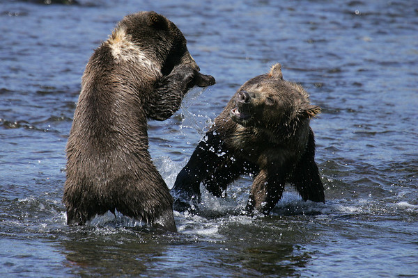 Alaskan Bear Adventure