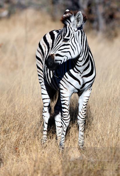 Botswana-20110716-4889-Edit.jpg