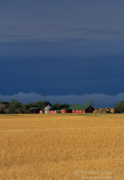 Wheat field and farm buildings near Saskatoon, Saskatchewan