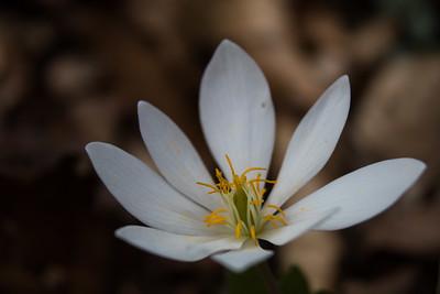 Kentucky Wildflowers