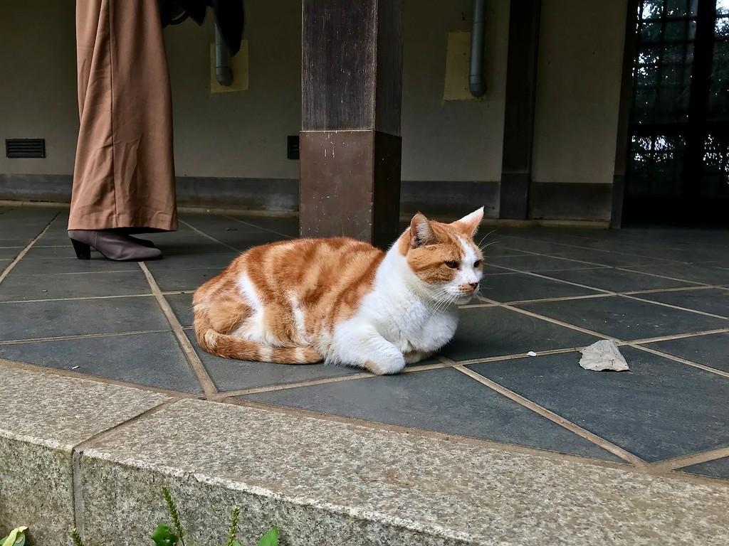 A resident fat cat.