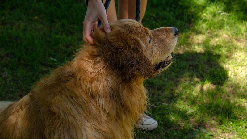 PuppyParty18-308.jpg