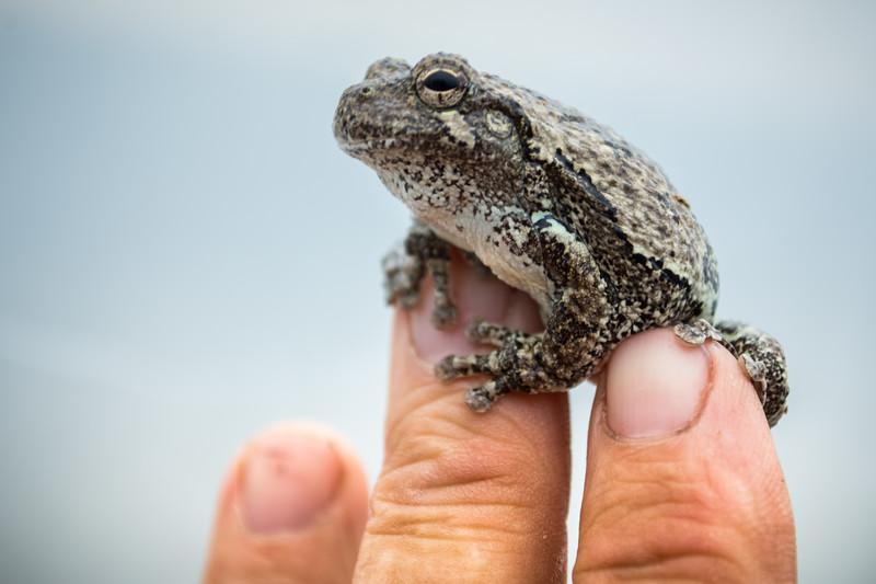 tree frog (1 of 3).jpg