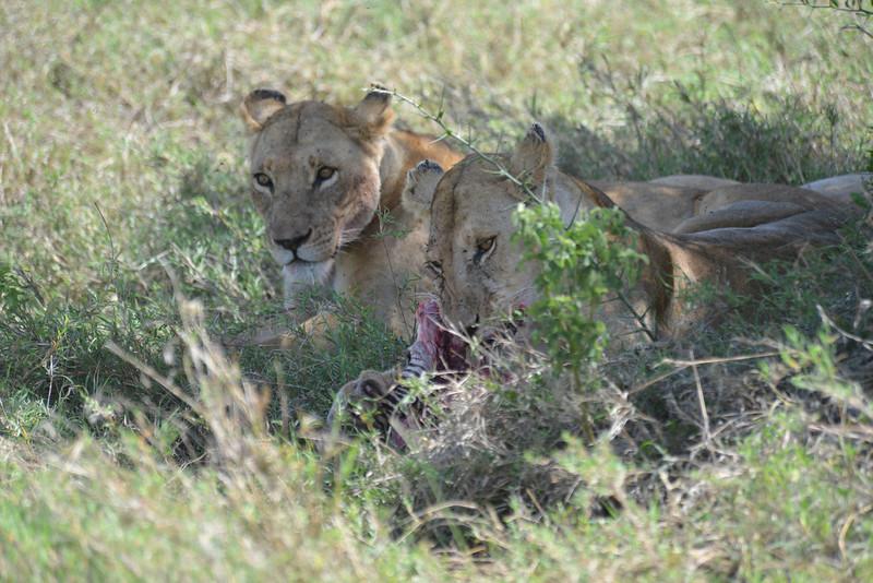 East Africa Safari 321.jpg