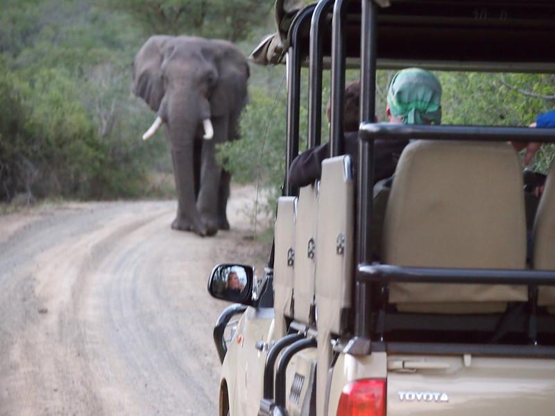 P5046310-elephant-confrontation.JPG