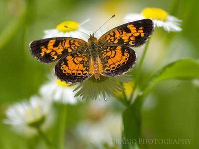 Save The Polinators